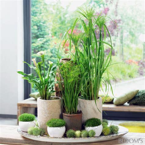 tischdeko pflanzen pflanzen deko ideen