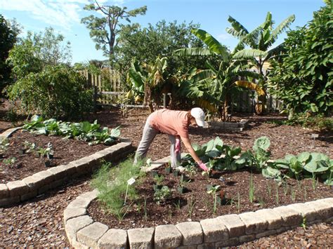 Vegetable Gardening In South Florida How Will Vegetable Gardening In South