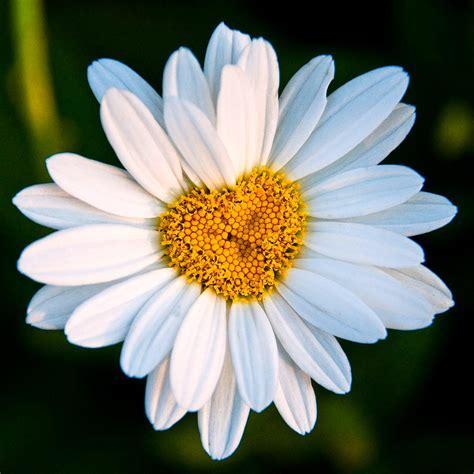 i fiore se ami un fiore non lo raccogli medicina