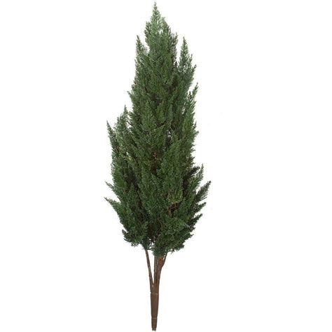earthflora 56 in polyblend outdoor plastic cypress bush