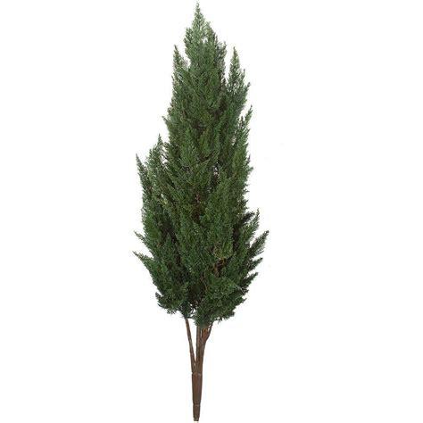 earthflora 56 in polyblend outdoor plastic cypress bush