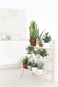 des plantes pour d 233 corer une cuisine blanche
