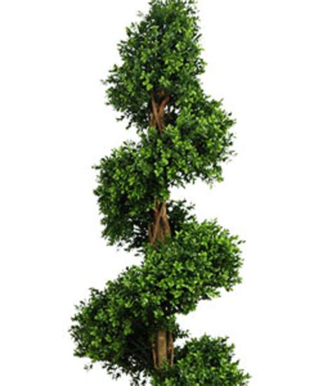 where to buy topiary trees plantart buy artificial plants artificial
