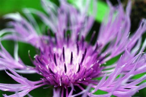 Mein Schöner Garten Fotos 3361 by Ausgezeichnet Wei 195 E Blumen Namen Mit Bild Galerie