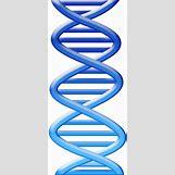 Biology Dna Clipart | 1590 x 3525 jpeg 273kB