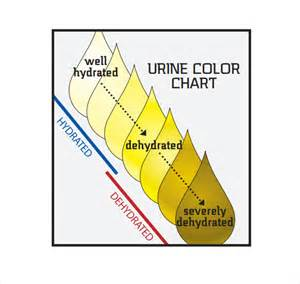 normal color urine color chart 9 free for pdf
