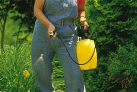 dish soap for garden pest does dish soap kill bugs in your garden home