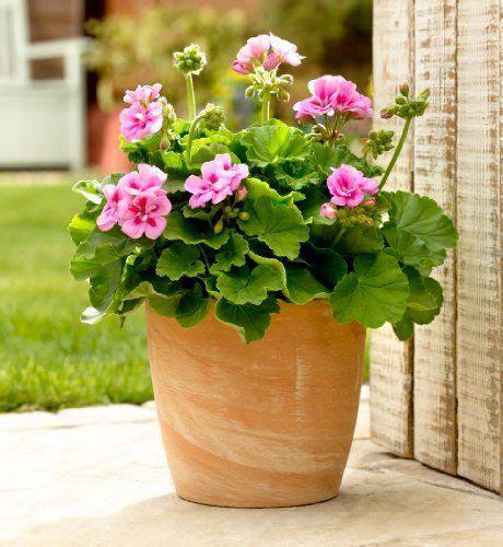 small flowering terracotta pot ms flower pots