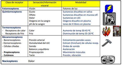 imagenes sensorial definicion y ejemplos neurofisiolog 237 a fisiolog 237 a de los receptores scykness
