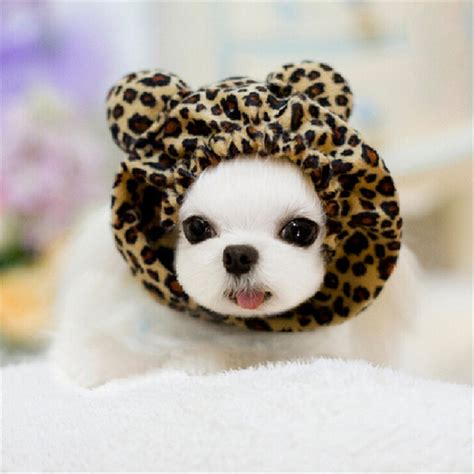 cute dog products leopard print cute little ears pet products hat caps pet