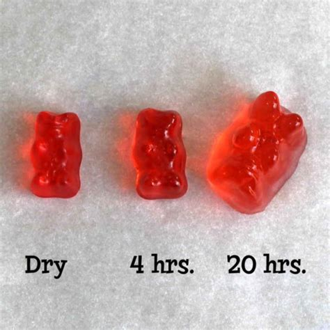 can dogs eat gummy bears make gummy bears with cannabutter