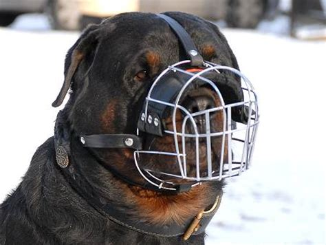 cage for rottweiler wire muzzle anti chewing 35 9