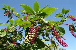 Nouvelles Les Huit Plantes Les Plus Toxiques Au Canada