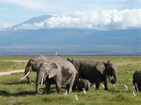 le elefant elefant