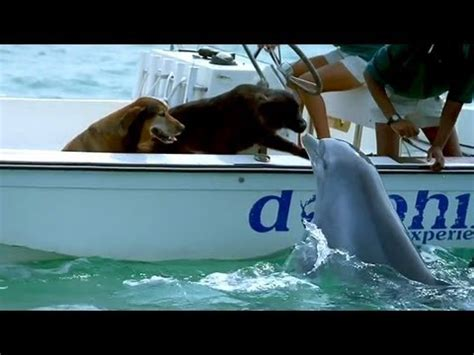 dog boat dolphin dolphin kisses dog jumps for joy youtube
