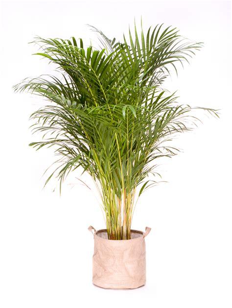 Plante Verte D Appartement Photo by Plante Verte D Interieur Depolluante Photos De