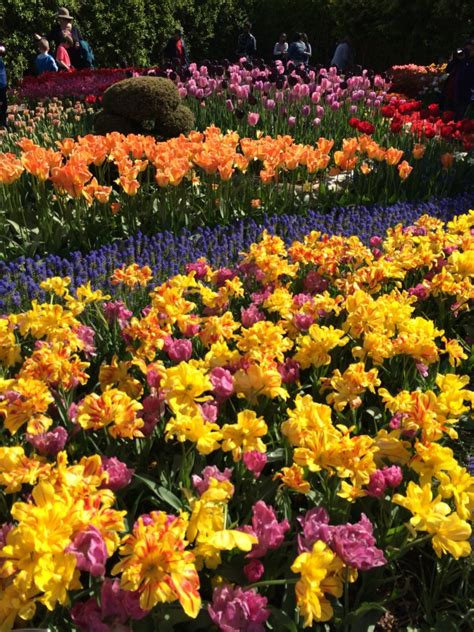 Roozengaarde Display Garden by Skagit Valley Tulip Festival Connie Fan
