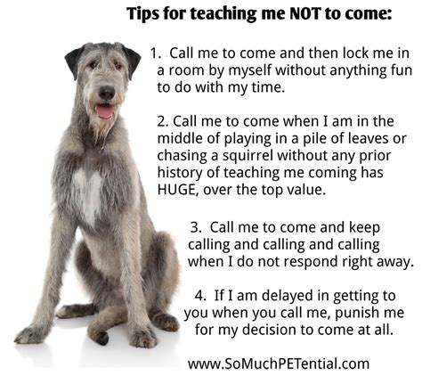 How To Teach Your Dog Not To Come So Much Petential