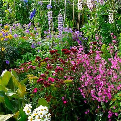 cottage garden ideas cottage garden ideas ideas advice diy at b q