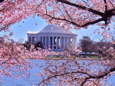 cherry blossom festival dc hoco connect columbia s own cherry blossom festival