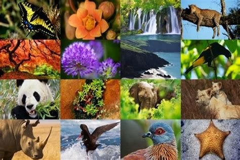 imagenes de animales y plantas de mexico megadiversidad en mexico