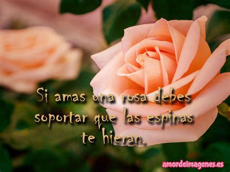 imagenes de rosas hermosas con frases de amistad im 225 genes de rosas con frases de amor