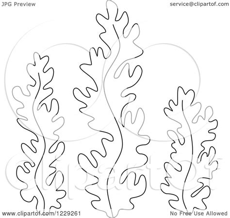 Clipart Of Outlined Seaweed Royalty Free Vector Seaweed Coloring Pages