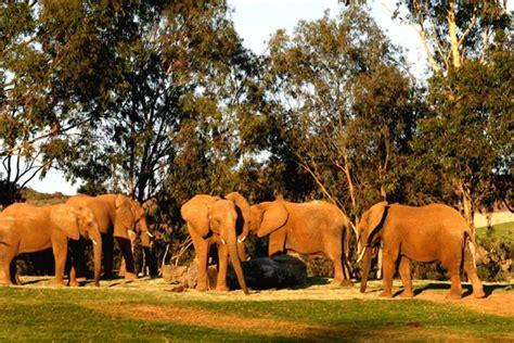 best safari park san diego zoo safari park san diego attractions review