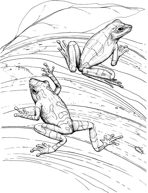 frog legs coloring page food frog legs coloring page coloring pages