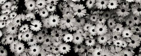 desktop wallpaper black and white flowers black and white flowers wallpapers hd backgrounds haammss