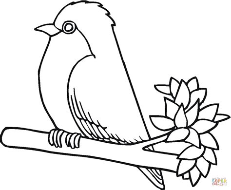 Robin Bird Coloring Page Free Printable Coloring Pages Robin Coloring Pages