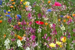 wildflower seeds collectionsfor your beautiful garden