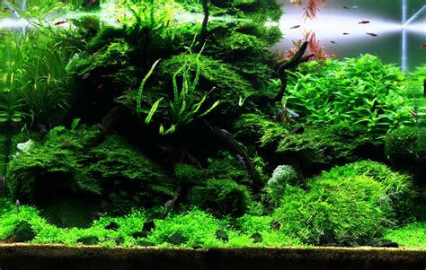 Aquascape Plants by Suitable Plants Aqua Rebell