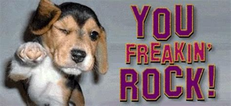 You Rock Meme - you freakin rock desicomments com