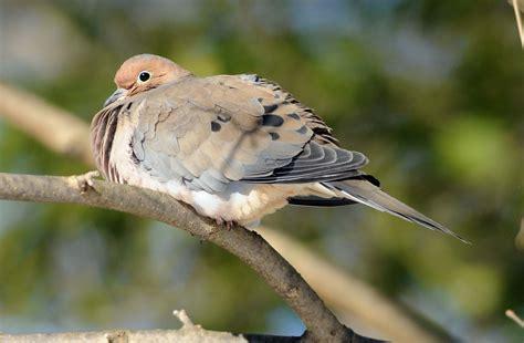birds in the backyard birds seek out backyard feeders in winter