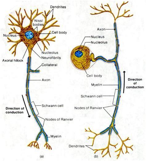 motor neurom 19 may 2011 anjung sains makmal 3