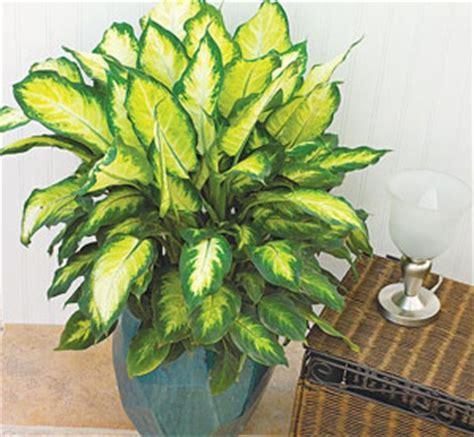 no sun plants indoor 15 те стайни растения които трудно можете да уморите
