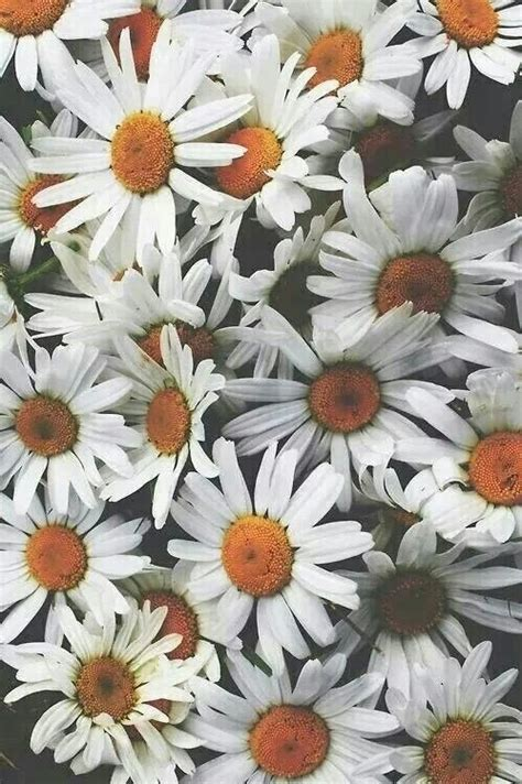 tumblr wallpapers daisies background daisy tumblr lockscreen image 2993651 by