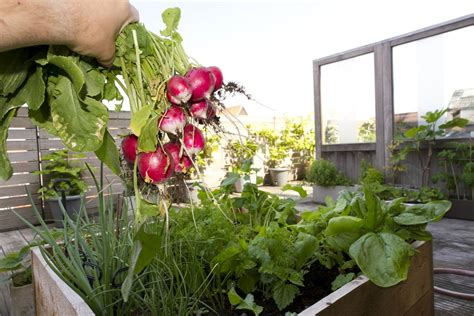 vegetables grown in what vegetables can you grow in containers