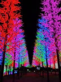 25 best lights in trees ideas on pinterest backyards