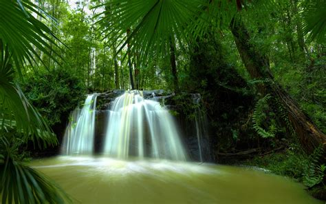 url http www wallgc  waterfall forest nature