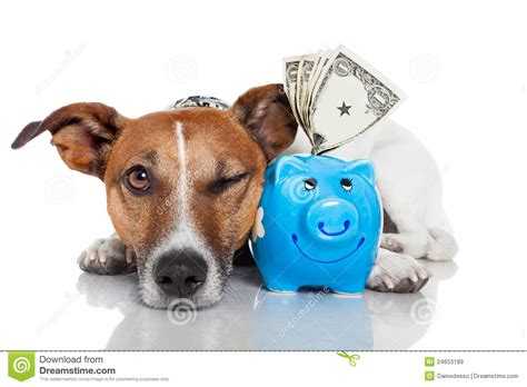 puppy piggy bank with piggy bank royalty free stock images image 24653189
