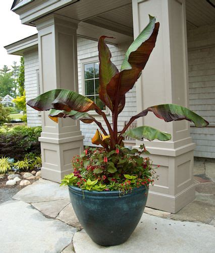 Large Container Gardening Ideas 5 Tips For Planting Great Looking Large Containers