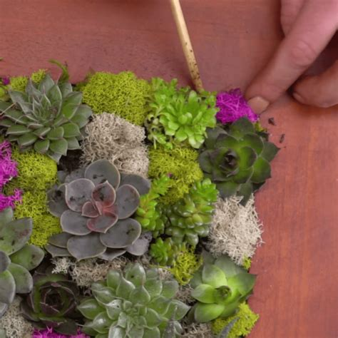 how to make a succulent wall garden how to make a succulent wall garden in a picture frame