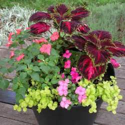 shade container garden plants pinterest