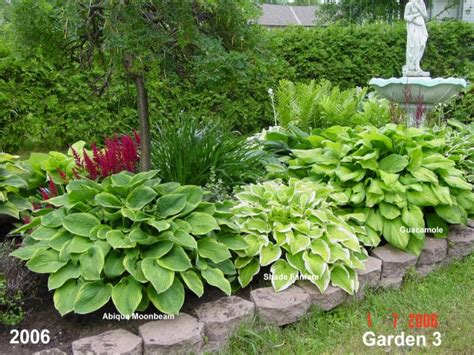 Hostas Flowers Pictures Beautiful Flowers Hosta Garden Layout