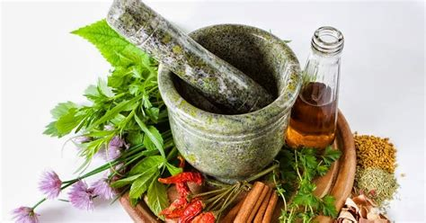 Aneka Tanaman Obat Dan Khasiatnya putra garden sekilas tentang tanaman obat keluarga toga