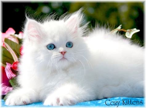 cute beautiful cute cats wallpapers beautiful cool wallpapers