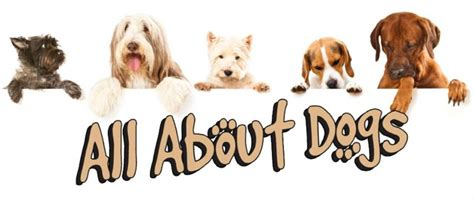 all about dogs suffolk cottage days out bury st edmunds woodfarm barns
