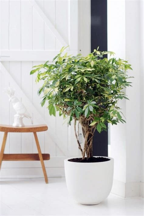 pretty indoor plants 25 best ideas about large indoor plants on pinterest